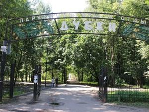 Новый подрядчик приступил к благоустройству парка «Дубки»