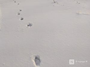 За создание в Нижнем Новгороде «парковок» для снега выступил Александр Курдюмов