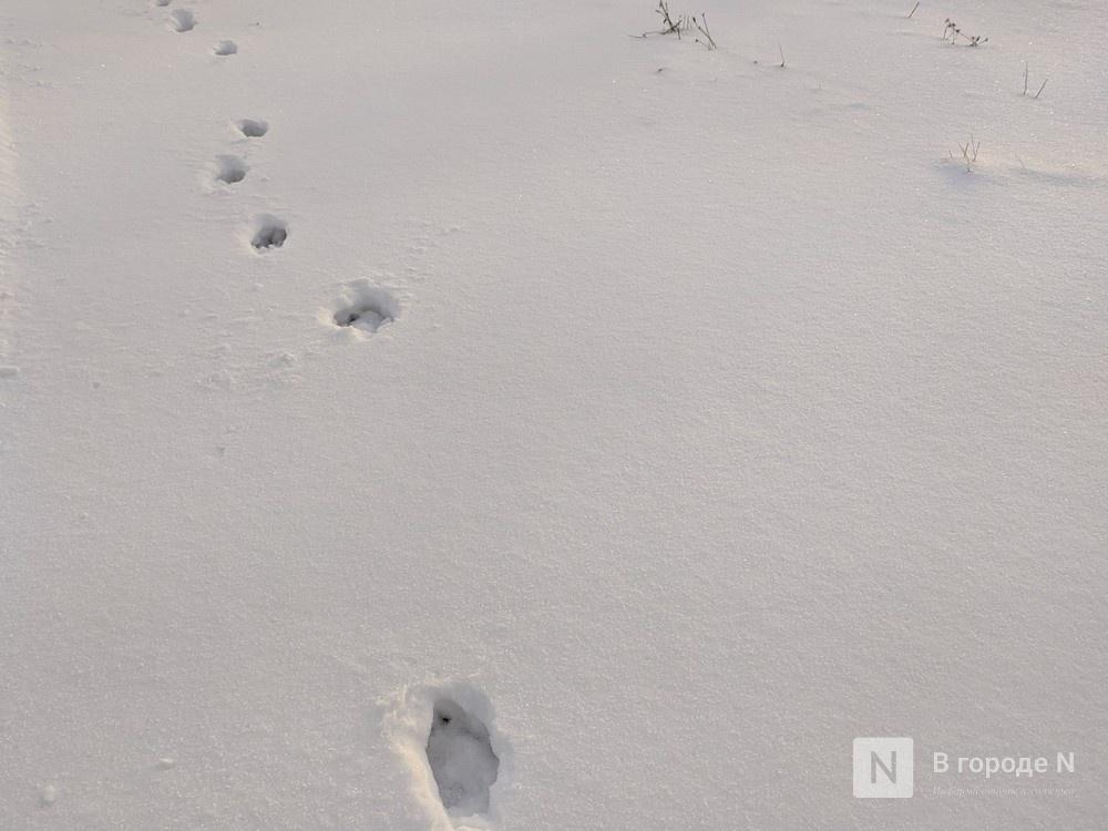 За создание в Нижнем Новгороде парковок для снега выступил Александр Курдюмов - фото 1