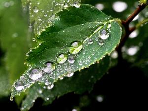 Теплая и дождливая погода ждет нижегородцев в выходные
