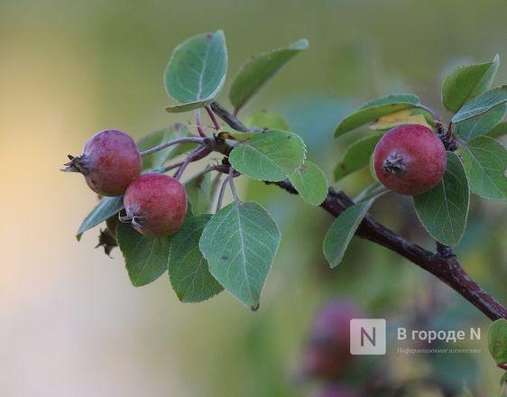 Самолеты, силуэты, яблони: Как преобразился Нижегородский район - фото 13