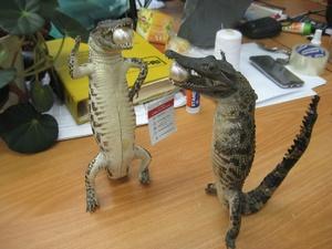 Двух крокодилов из Вьетнама изъяли нижегородские таможенники