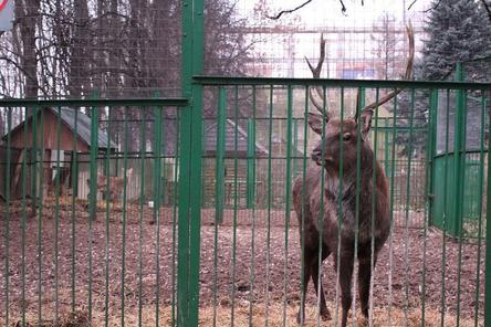 Законность закрытия нижегородского зоопарка «Мишутка» проверит прокуратура