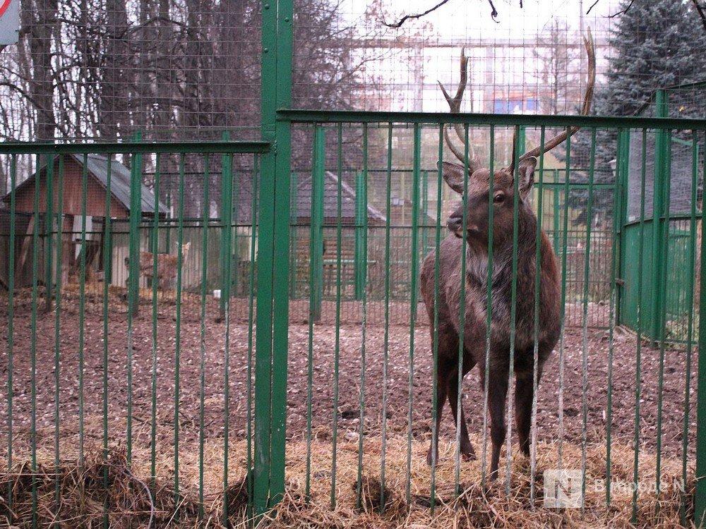 Законность закрытия нижегородского зоопарка «Мишутка» проверит прокуратура - фото 1