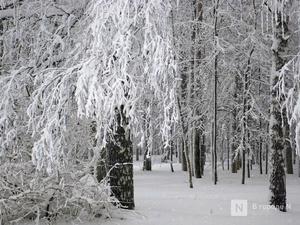 Снежная и пасмурная неделя ждет нижегородцев