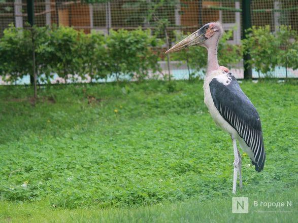Уникальный вольер для марабу построили в нижегородском зоопарке - фото 23