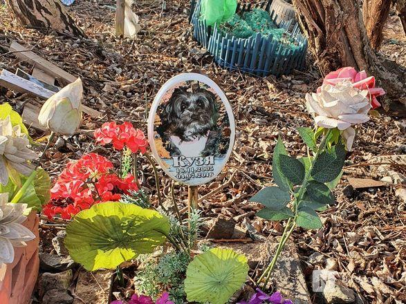 Православный крест над котом: где находится нижегородское кладбище домашних животных - фото 11