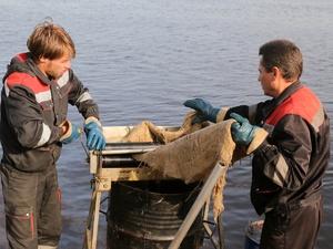 Около 600 литров нефтепродуктов собрали с поверхности Волги у Бурнаковской низины