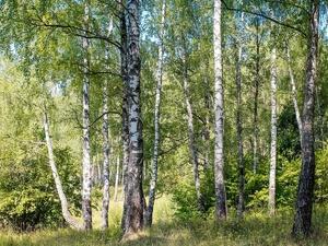 Новые леса высадят в Нижегородской области